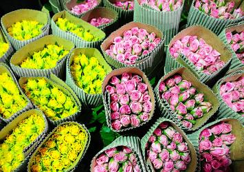 premier-roses-packaging