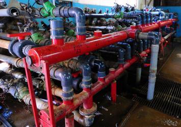 premier-roses-water-pump
