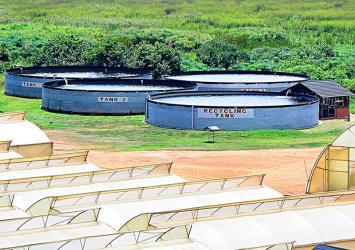 premier-roses-water-tanks