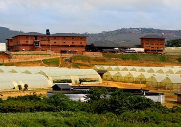 premier-roses-farm